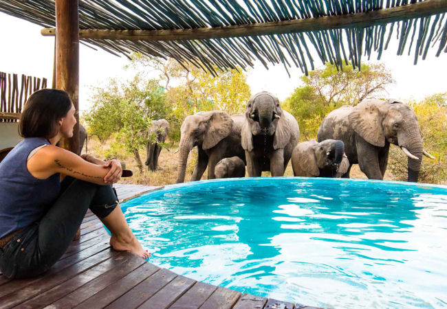 Elephants at pool - small