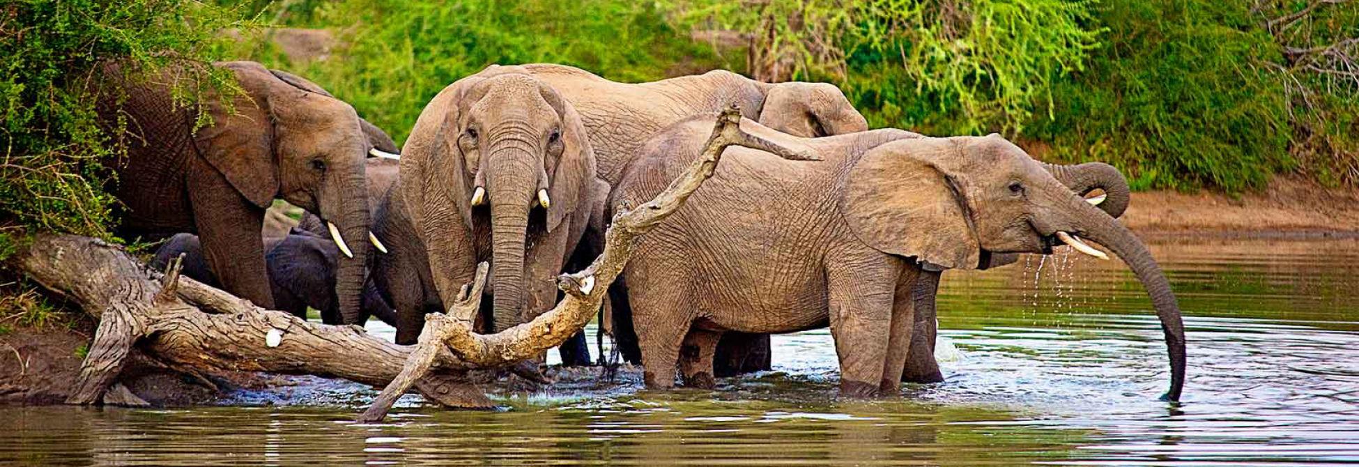 Go Self-Drive Tours South Africa Kruger Park Wildlife