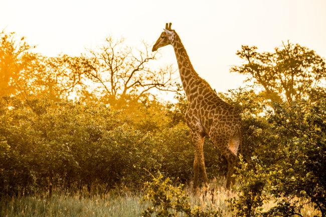 Lower Sabie Kruger Park