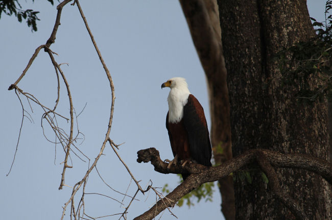 Mkuze Game Reserve