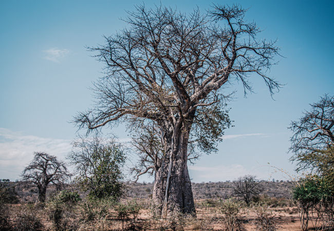 Matobo National Park